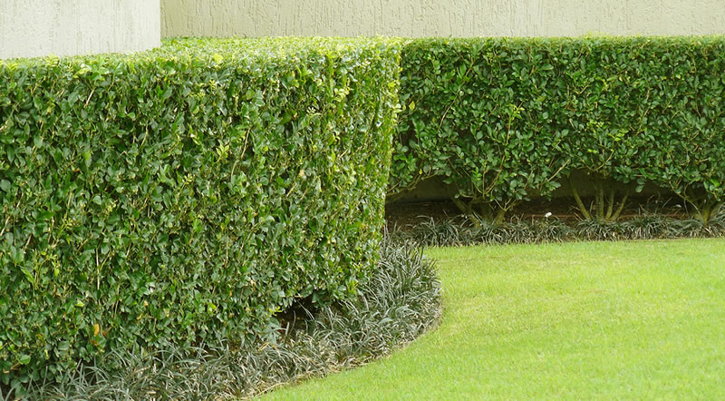 Hedge, Shrub, and Brush Trimming and Pruning Services.