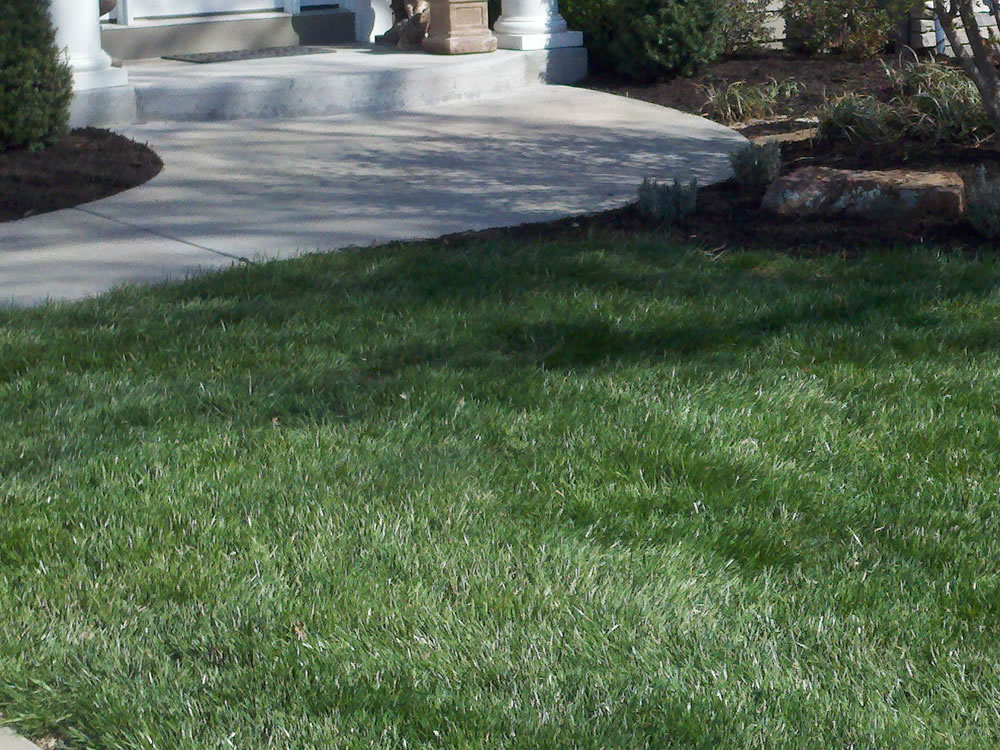 This New Lawn Was Installed Using Sod.
